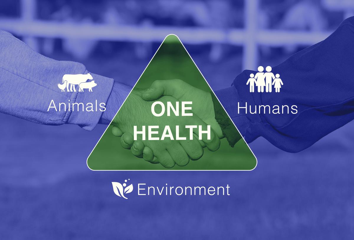 animal-antibiotics-health-graphic